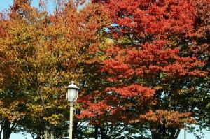 ビッグタートルの紅葉