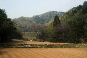 春の鐘撞堂山