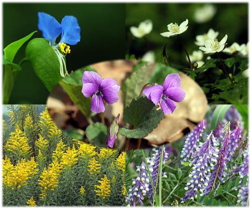 深谷市の野の花