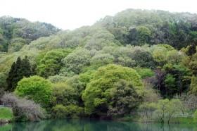 新緑の谷津池